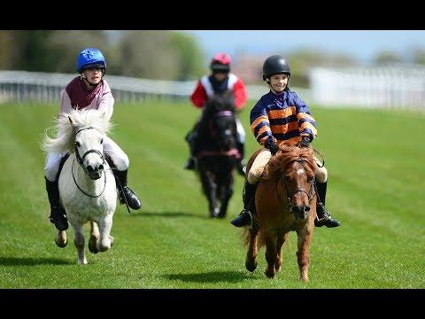 Pocket Rockets - Shetland Pony Race!