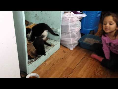 New barn kittens for the farm
