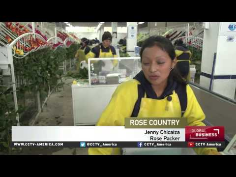 Ecuadors flower exports keep its economy blooming