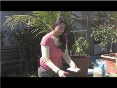 Vegetable Gardening : How to Store Tomato Seeds