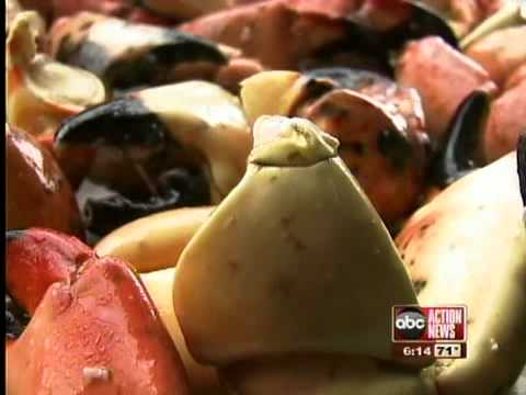 Stone crab claws hard to come by this season