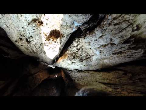 Inside a squirrel's den in winter (in a hollow tree)