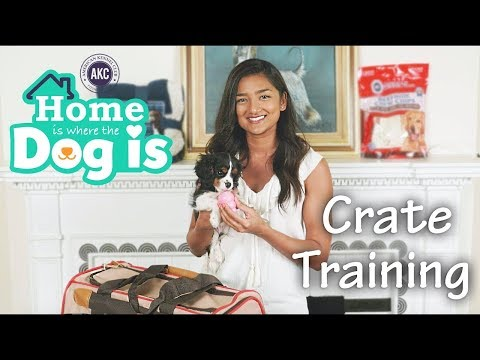 Episode 3 - Crate training - AKC's Home is Where the Dog is