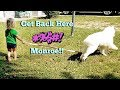 Mad Toddler Tries To Walk Husky Puppy Funny Video mp3
