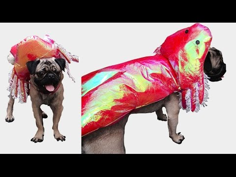 Como Hacer Un Disfraz Adorable de Ajolote (Axolotl) Para tu Perro este Halloween | Live Colorful
