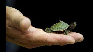 Top Funny Small Turtle Videos / Tortoise Videos Compilation - Cute Animals