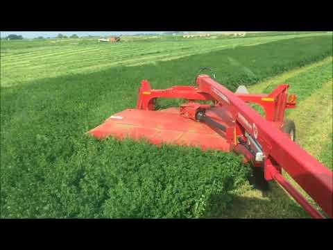 First cut hay 2018