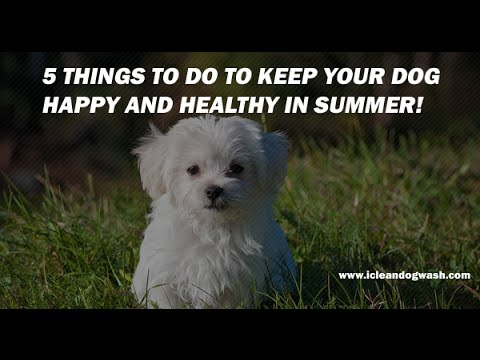 5 Things To Do To Keep Your Dog Happy And Healthy in Summer!
