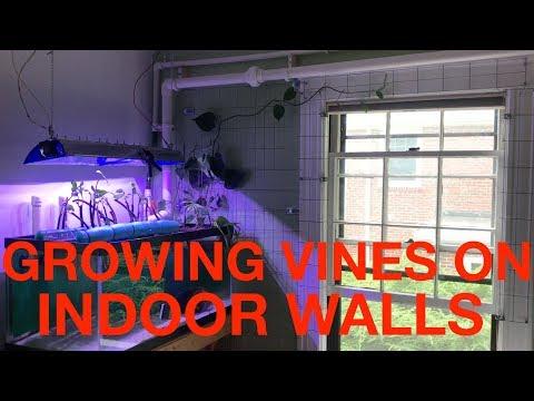 An Indoor Trellis for Growing Vines