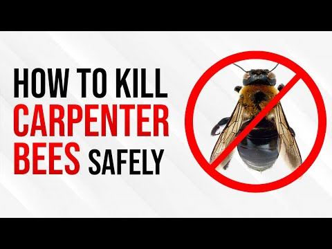 How To Kill Carpenter Bees Safely and Easily