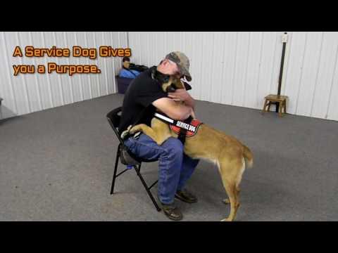 On Command Canine Training