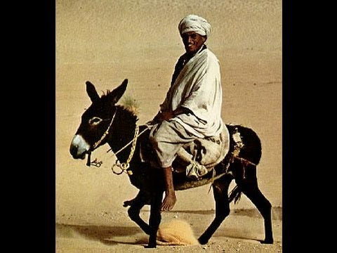 The Antichrist is Barack Obama He'll ride a donkey To Jerusalem In 2 weeks Same as Jesus did.!