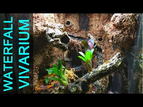 Vivarium Waterfall Build!