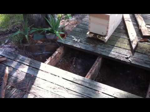 Honeybee Removal - 004 - Bees Under Deck 09/07/2012