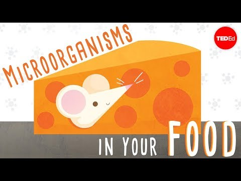 The beneficial bacteria that make delicious food - Erez Garty