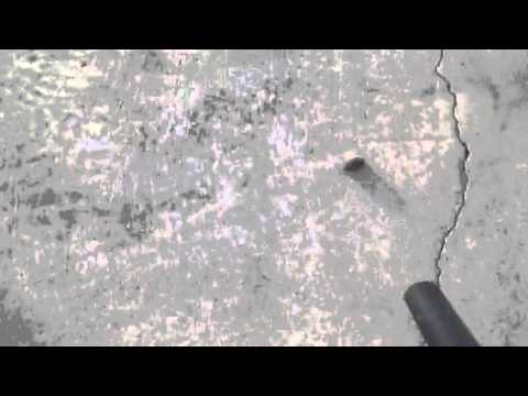 How to remove dog poop from concrete.