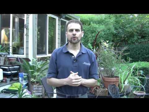 How to Care for Plants in Containers in Winter
