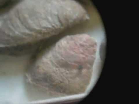 San Juan Islands Fossils in Rock from Lopez Island Washington