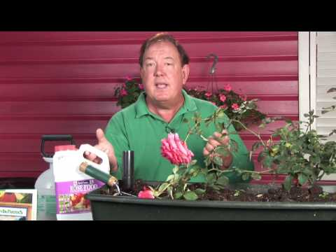 Growing Roses : How to Control Rust on Roses
