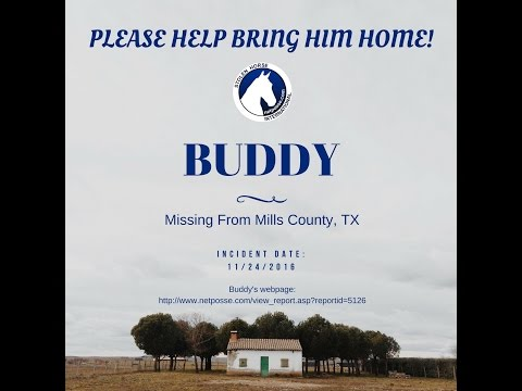 Buddy - Missing from Texas