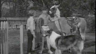 "Lassie - Episode #302 - ""a Career For Lassie"" - Season 9, Ep. 11 - 12/16/1962"