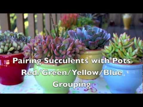 Pairing Succulents with Pots: Red/Green/Yellow/Blue Grouping