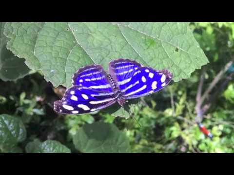 Philippine Butterfly Cooperative