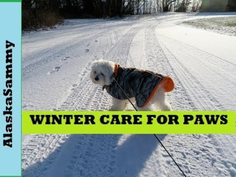 Winter Care For Dog's Paws