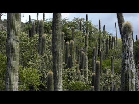 Land purchase in Sierra Gorda, Mexico