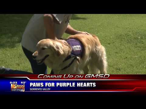 KUSI Good Morning San Diego Teases Grand Opening of Paws for Purple Hearts