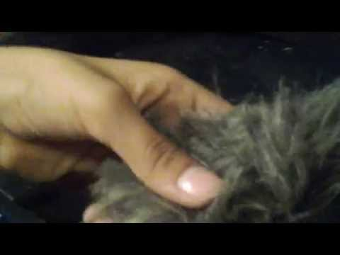How to make wolf ears D.I.Y