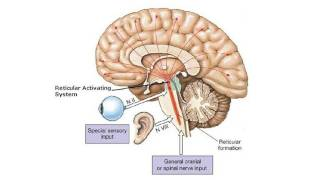 Understanding the Brain: A work in progress - Professor Keith Kendrick