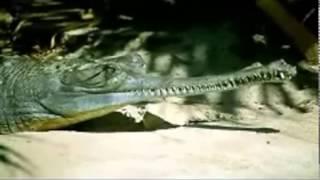 حصري علي kas.tv اغرب عشرة حيوانات في العالم روعه