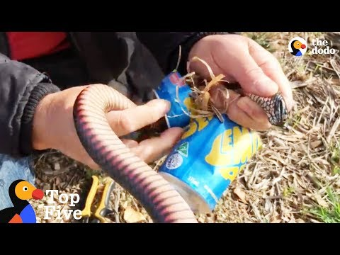 Venomous Snake Rescued From Can + Stuck Animals Who Need Help | The Dodo Top 5