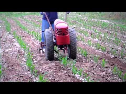 1951 David Bradley cultivating corn rows