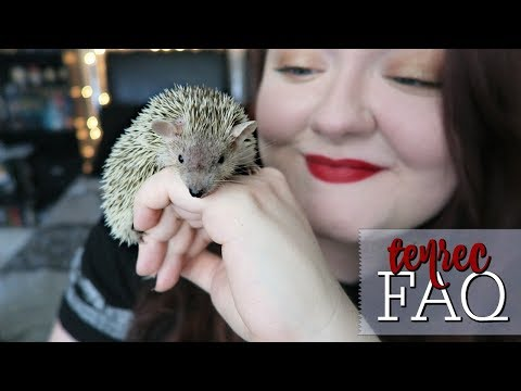 Lesser Hedgehog Tenrecs: Frequently Asked Questions! (About Finn!)