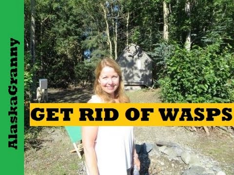Get Rid of Wasps and Yellow Jackets