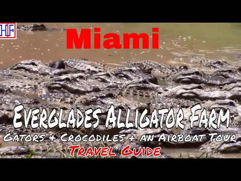 Miami | Everglades Alligator Farm - Gators & crocodiles plus an Airboat tour | Travel Guide | Ep# 6
