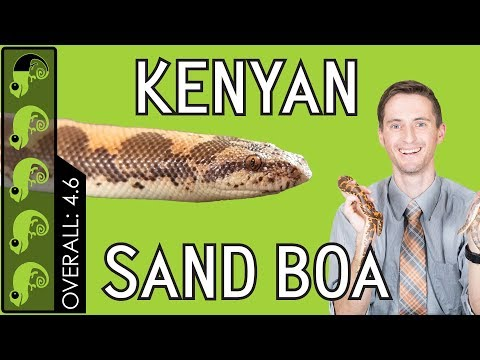 Kenyan Sand Boa, The Best Pet Snake?