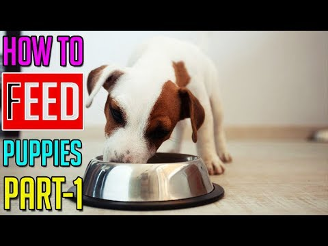 How To Feed Puppies || How To Choose The Best Puppy Food || Part-1 || Dog Facts