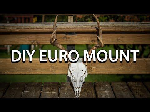 DIY Euro mount - Columbia Blacktail Deer