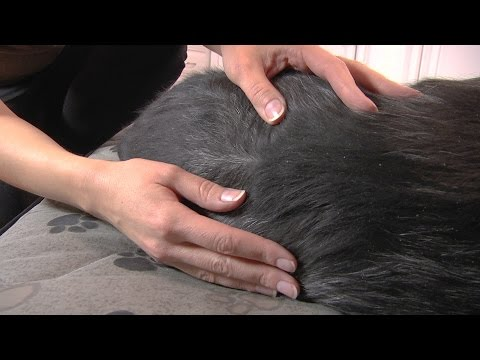 Ask Our Vets: Dandruff in Dogs