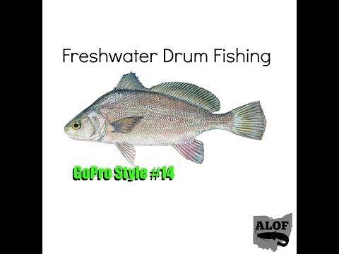 Freshwater Drum Fishing
