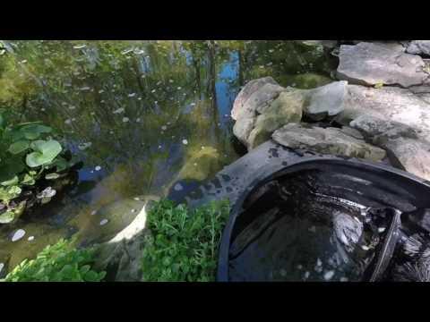 Pond skimmer weir