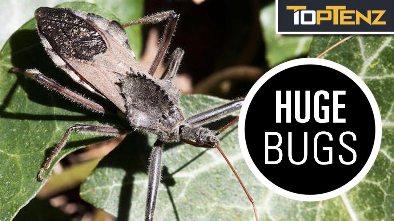 10 Bizarre Bugs That Defy Imagination