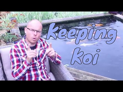 What You Need to Know About Keeping Koi Carp | Any Pond Limited | UK