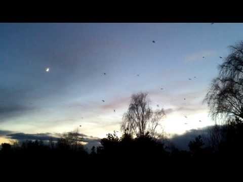 Birds Epic Flight in sunset