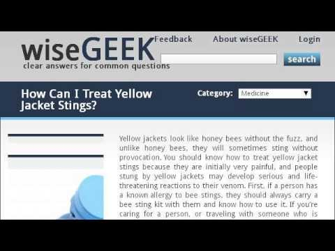 Symptoms Of A Yellow Jacket Sting In Cats