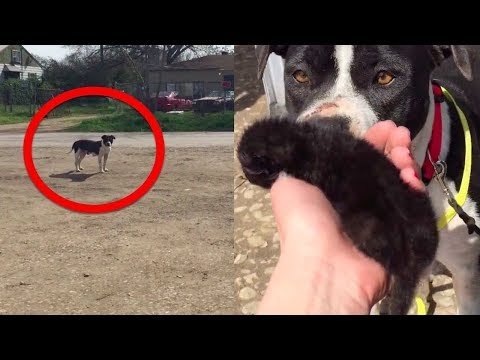 A Worker Found This Stray Dog At The Roadside Then She Realized It Was Protecting Another Animal