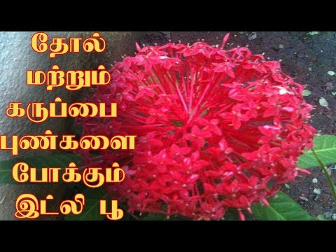 Easy tips to get rid of all Human problems|Tamil News|
